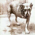 ALICE IN CHAINS: Alice In Chains (CD)